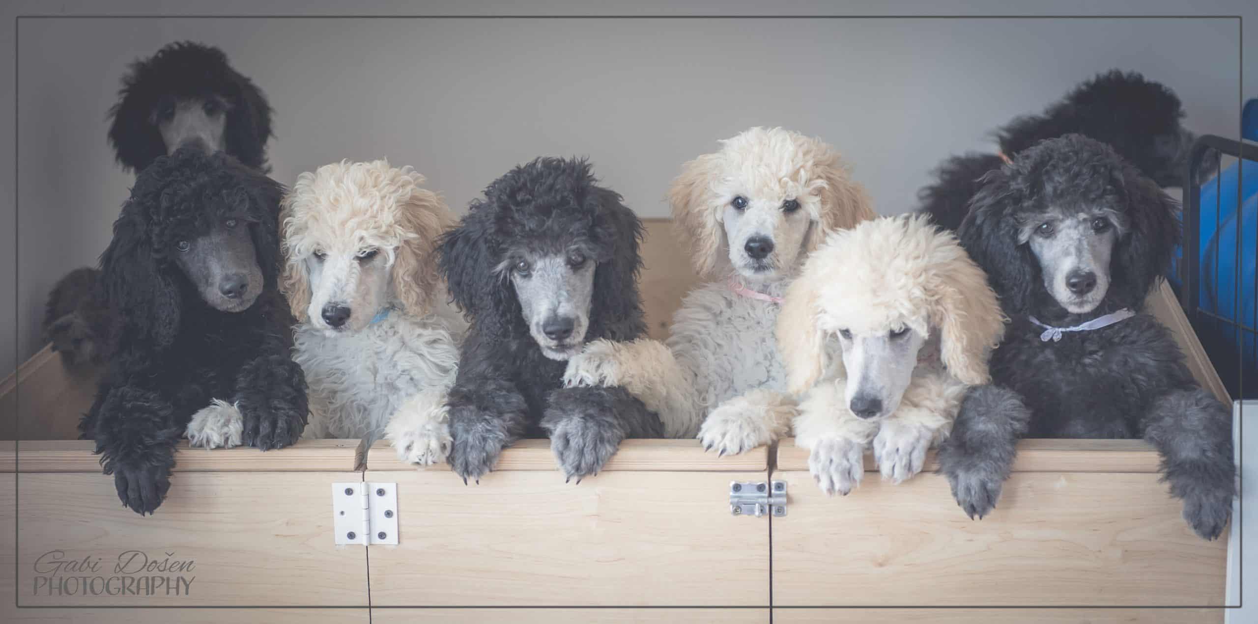 štenci Diu Morata
